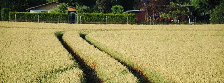 Механизм предоставления субсидированного агрострахования потерял свою актуальность