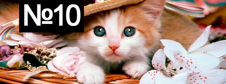 Страхование кошки
