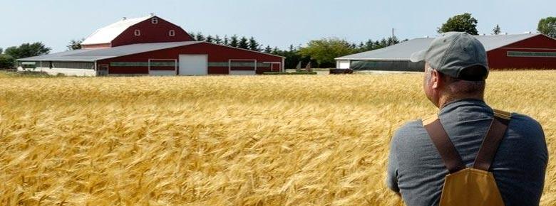 Страховщики оценили убытки аграриев от сильной засухи в США в $1 млрд.