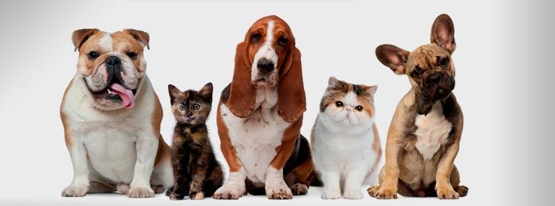 Кого хозяева страхуют чаще — собак или кошек?