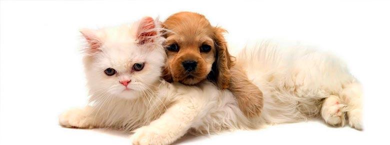 84% кошек и 67% собак в Великобритании незастрахованы
