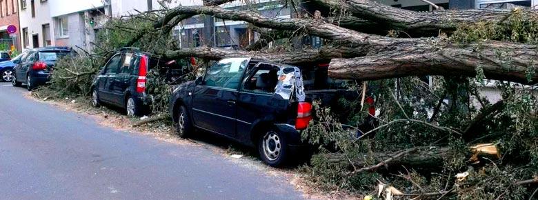 Кто несёт ответственность за падение дерева на автомобиль, незастрахованный по КАСКО?