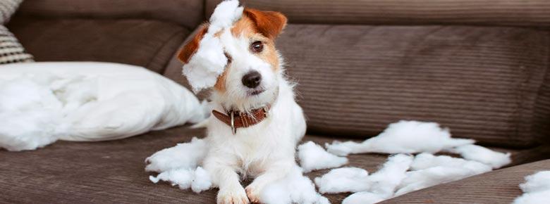 Зарубежный опыт страхования животных
