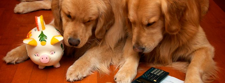 Страхование животных становится популярным. Каких питомцев страхуют и от чего?