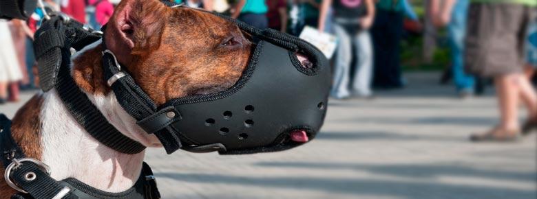 В России могут ввести страхование ответственности для владельцев собак опасных пород