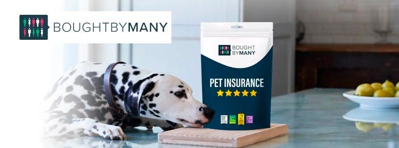 Иншуртех Bought By Many по страхованию домашних животных привлек $350 млн в рамках финансирования раунда D при оценке стартапа в $2 млрд