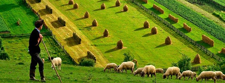 В Украине запустят систему господдержки сельскохозяйственного страхования: аграриям компенсируют до 60% страховой премии