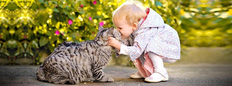 Ассортимент продуктов по страхованию домашних животных растёт. Есть спрос, есть предложение
