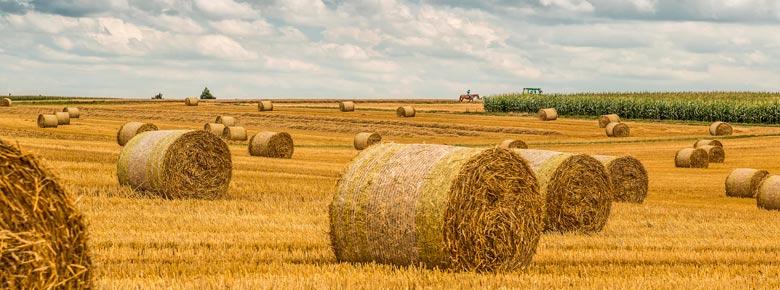 Узнать стоимость агрострахования в Украине и купить полис