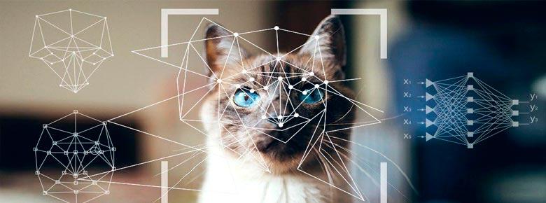 Сбербанк интегрировал новый алгоритм распознавания домашних животных в программу страхования «Питомец под защитой»